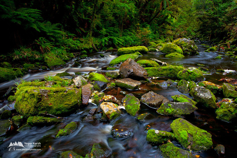 Tautuku River near McLean Falls, Catlins, South Island, New Zealand