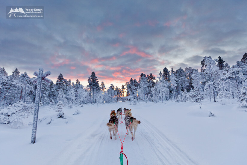 Dog Sledding in Lapland, Finland